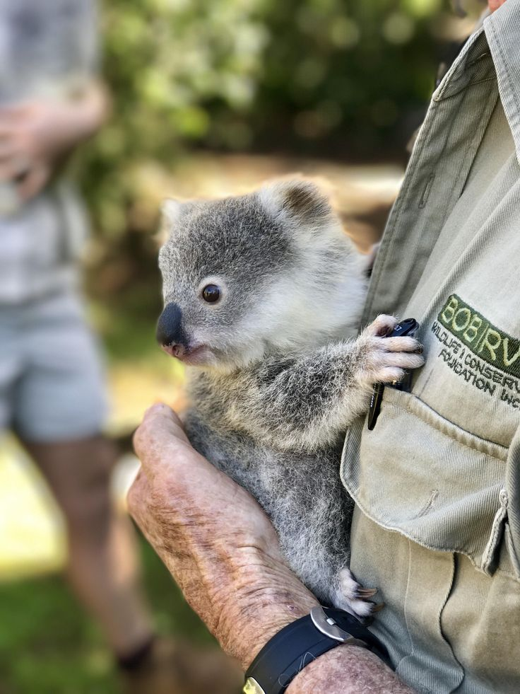 Went to do some promotional videos at a local zoo and got to meet this little dude! http://ift.tt/2tOXtiP