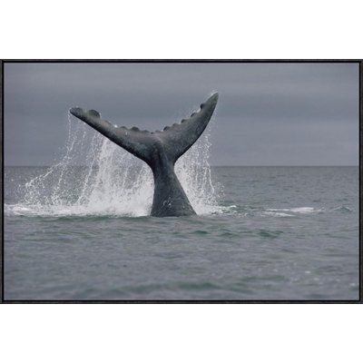 "East Urban Home 'Southern Right Whale Tail, Peninsula Valdez, Argentina' Photographic Print Size: 24"" H x 36"" W, Format: Black Framed"