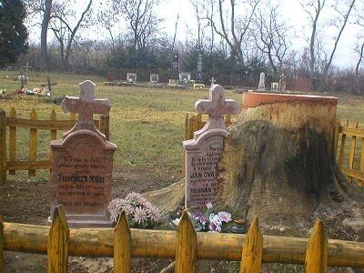Miestna rarita. Pomník vrastený do kmeňa stromu.