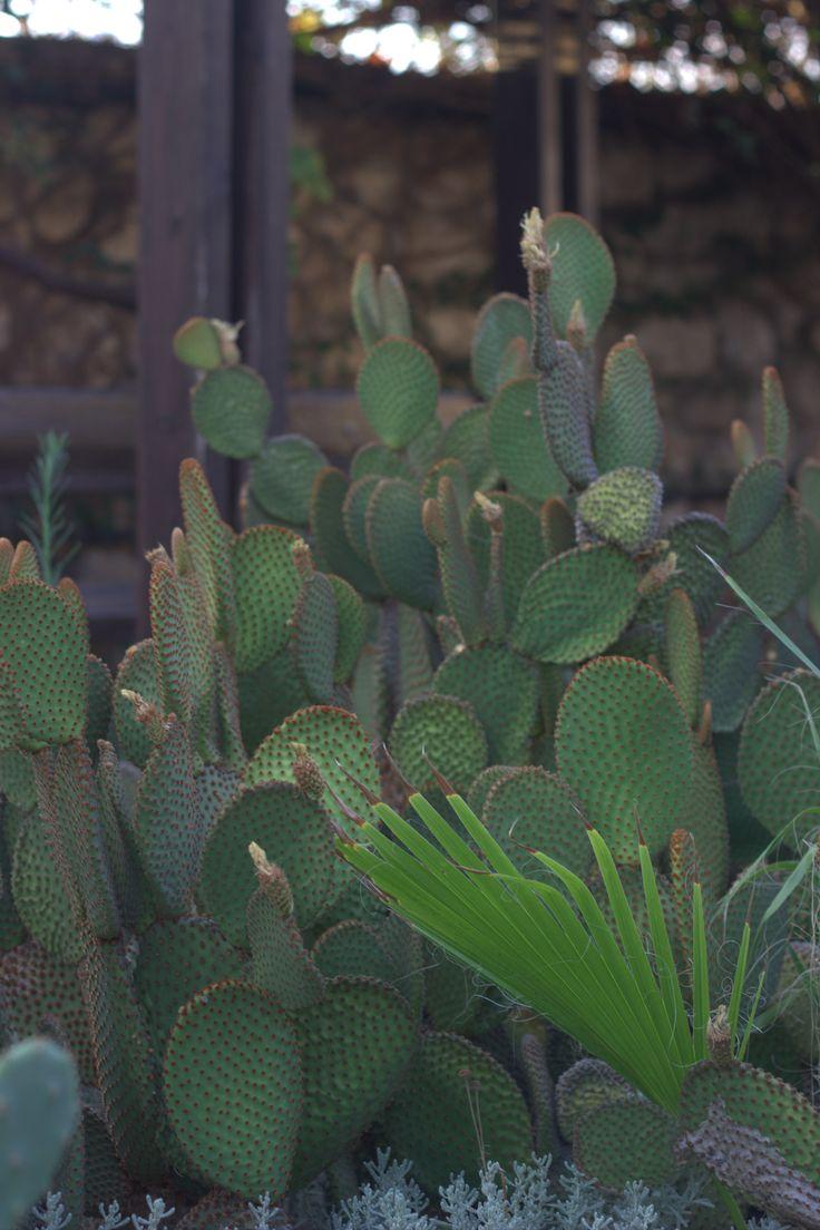 Cactus in Holon cactus park #holon #חולון