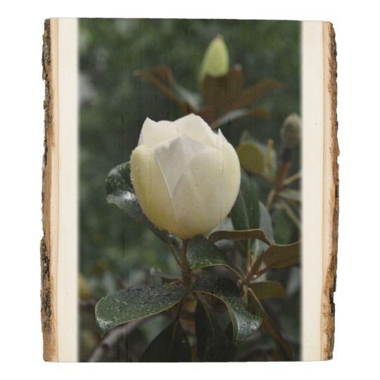 Magnolia Grandiflora Woodland Wooden Photo Panel by www.zazzle.com/htgraphicdesigner* #zazzle #gift #giftidea #magnolia #photography #flower #flowers #white #grandiflora