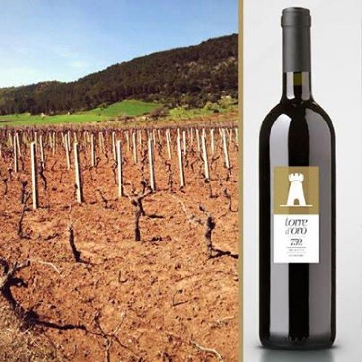 Fiore all'occhiello della 750ml, insieme al vino rosso Le mura Primitivo di Manduria DOC è il vino bianco Torre d'Oro Doc Locorotondo, fortemente voluto dal titolare dell'azienda Antonio Cardone. | http://nicopaulangelo.wordpress.com/2014/07/28/doc-locorotondo-torre-doro-di-750ml-un-vino-nato-per-valorizzare-un-territorio/ #torredoro #torre #oro #wine #white #locorotondo #doc #doclocorotondo #750ml #vino #bianco #puglia #apulia #lemura #primitivo #manduria #zinfandel #aperitif