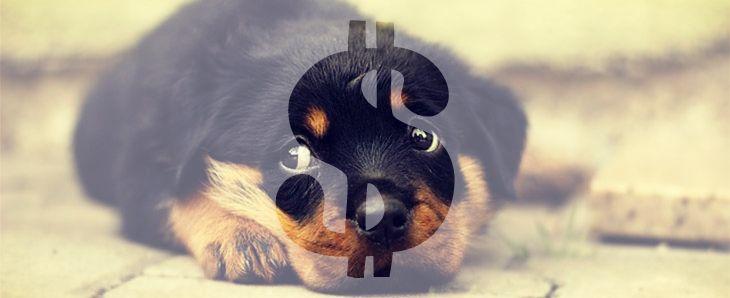"""A """"Welpen sind keine Ware"""" vagyis a """"Kölykök nem árucikkek"""" nevű kezdeményezésben résztvevő VDH, a Német Kennel Klub, a TASSO, a német állatjóléti Szerveze"""