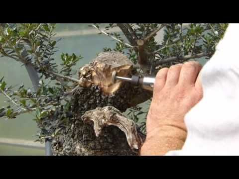 Creating Bonsai Trees From Wild Material (I love watching other people do things, it seems to make more sense than reading it in a book or someone explaining it and this short clip is quite informative)