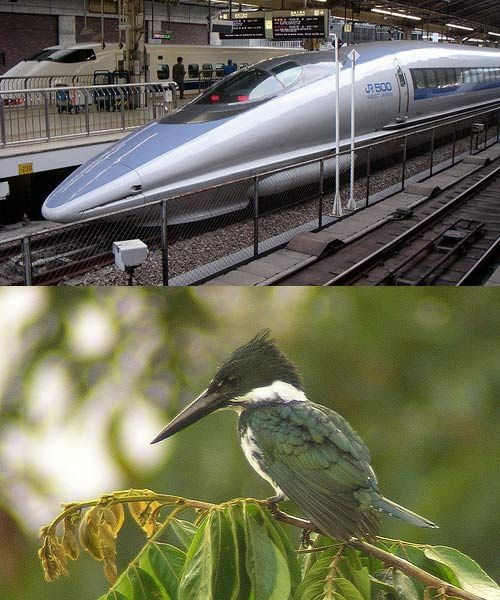 The goal was to cut out the extremely loud claps that occurred when Japan's bullet train emerged from tunnels. Engineers looked toward the kingfisher, which dives seamlessly into water. A nosecone designed after the bird's beak solved the issue.