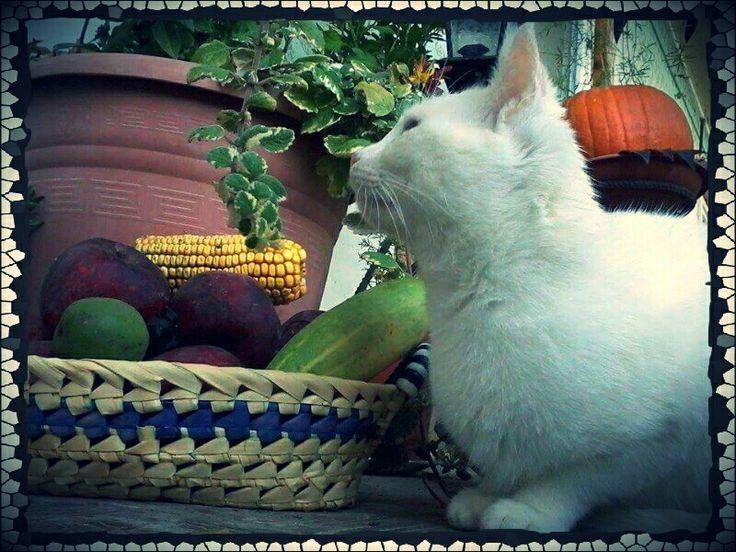 A macska is ámulva nézi! :D