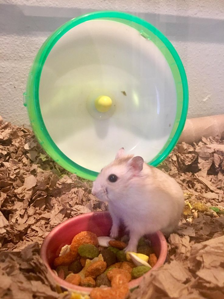 Gus showing off his full food bowlhttps//i.redd.it