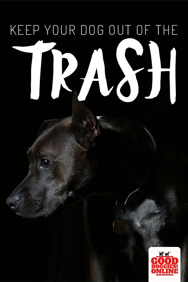 4 Ways To Keep Your Dog Out Of The Trash And Avoid Garbage Gut Dog