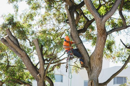 Know The Best Time To Have Tree Service #treeservice #treecutting #Brisbane