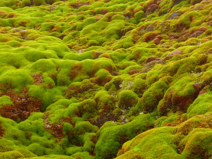 225 Best Mosses Images On Pinterest Plant Identification Mobile App And Mobile Applications