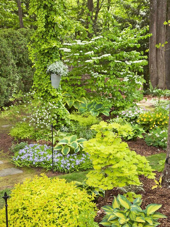 231 best images about shady woodland garden on pinterest gardens japanese painted fern and. Black Bedroom Furniture Sets. Home Design Ideas
