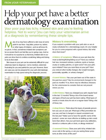 #Veterinary client handout: Speed up dermatology examinations by answering these five questions - dvm360