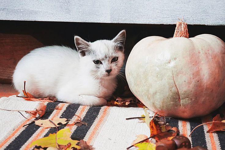 Hello pumpkin! 😸🎃🍁 #photoshoot #cats #halloweendecor #a6000 #autumn #karpati #darkmaskedcats #kitty #kittens #meow #ilovemycat #photography #catlovers  #catlover  #catlife #cataddicted #caturday  #cat