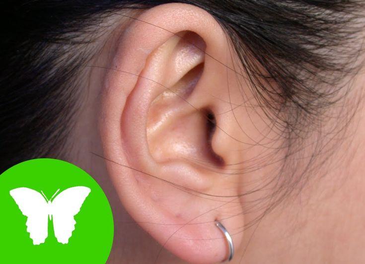la eduteca- los sentidos : el oído