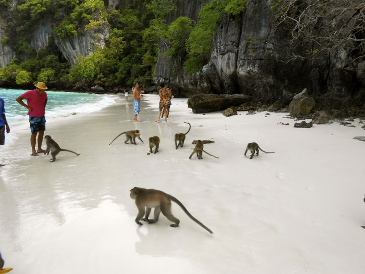 Monkey Beach, Ko Phi Phi island. I'm probably going to need to get over my fear of monkeys to go here...