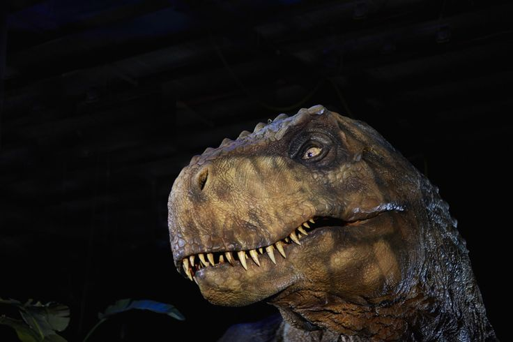 Melbourne Victoria Jurassic World The Exhibition world premiere exhibition. Melbourne Museum from 18 March 2016. Tickets on sale now!