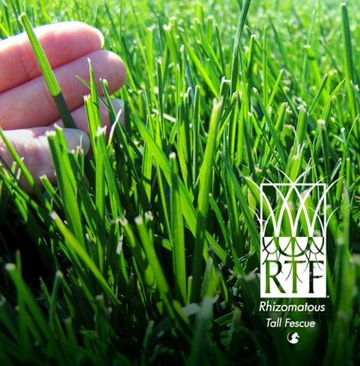 RTF Tall Fescue | Lilydale Instant Turf | Love your lawn | Great grass | Lily & Dale | Follow us | Garden Tips & Advice | Contact us | Lawn Solutions Australia