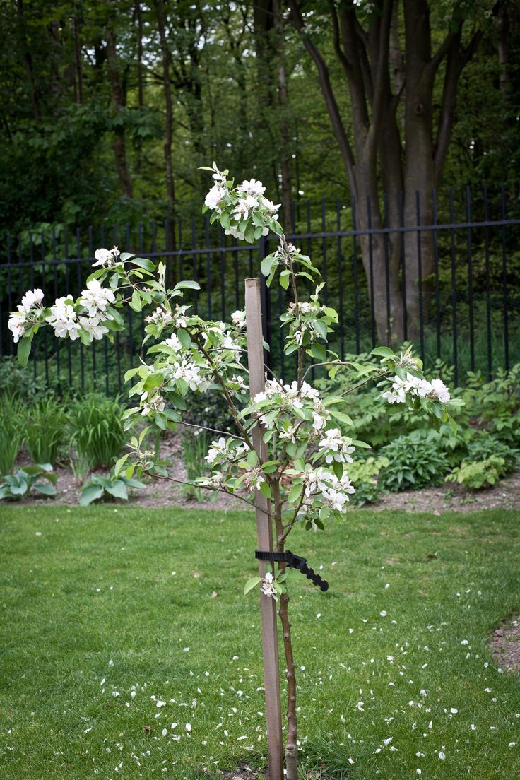 A small apple tree with the woods in the background fronted by the new woodland planting in the shade of the tree canopy.