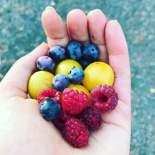 Here's to a FRUITFUL last week of 2016! 🍇🍋🍓   For more ideas on homesteading, gardening, and everything in between, be sure to check out our website (link in bio)! #HappyHomesteading