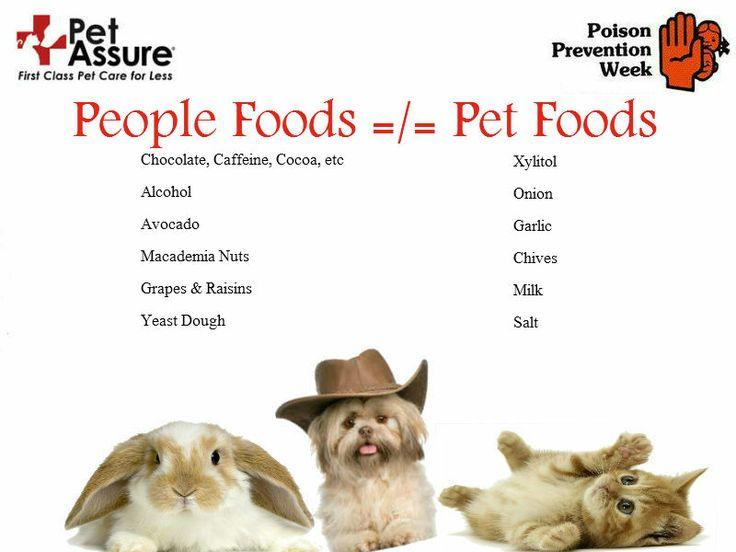 Aspca Safe Foods For Cats