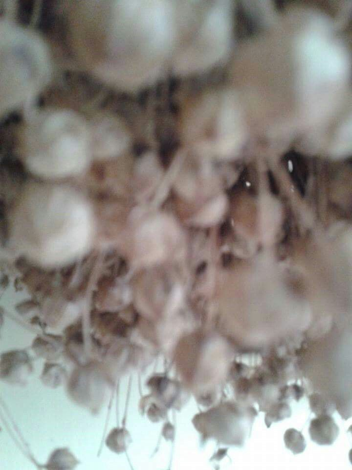 Art creative cloud flowers dry