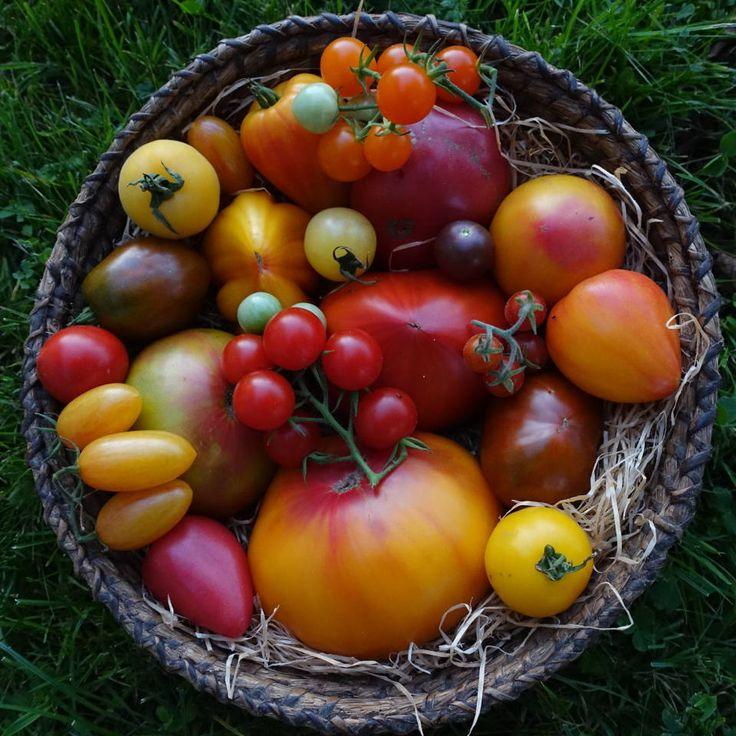 Andi's Gemüsesortenvielfalt