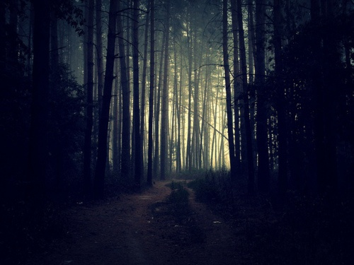 #color - A dark & gloomy forest | Mortal instruments City ...