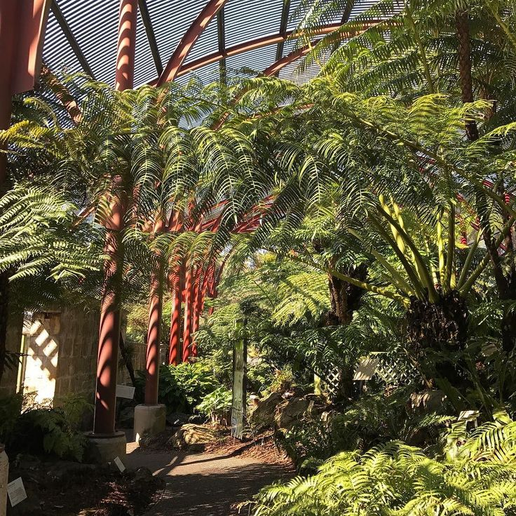 New favourite spot in Sydney. #PalmHouse  so beautiful quiet and peaceful @rbgsydney