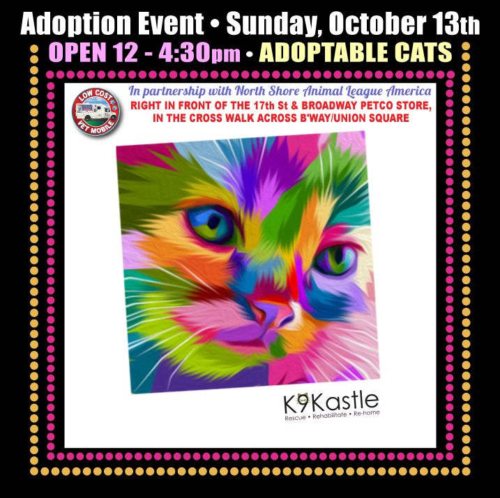 Cat Adoption Event on Sunday, October 13th, 12430pm