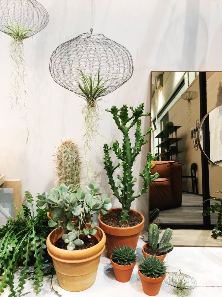 169 best tuin livingtrends 2017 images on pinterest for Indoor gardening trends