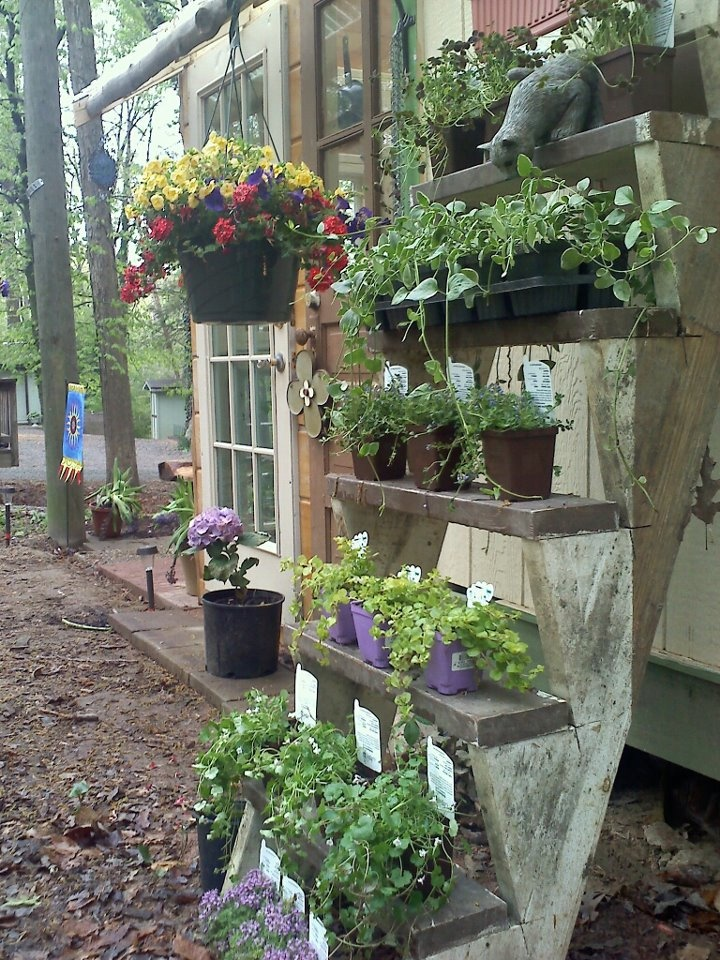 Hubby built me these adorable garden stairs from reclaimed building materials.  The stairs sit in front of my garden shed and welcome you to my little piece heaven.: Garden Sheds, Building, Gardens Idea, Adorable Gardens, Gardens Design, Garden Stairs, Design Idea, Gardens Stairs, Contrary Gardens