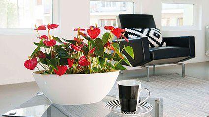 Tout savoir sur les plantes dépolluantes // http://www.deco.fr/jardin-jardinage/plante-interieur/actualite-585350-plantes-depolluantes.html