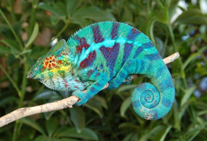 32 animaux tellement sublimes que vous penserez qu'ils ont été retouchés… Alors que non !