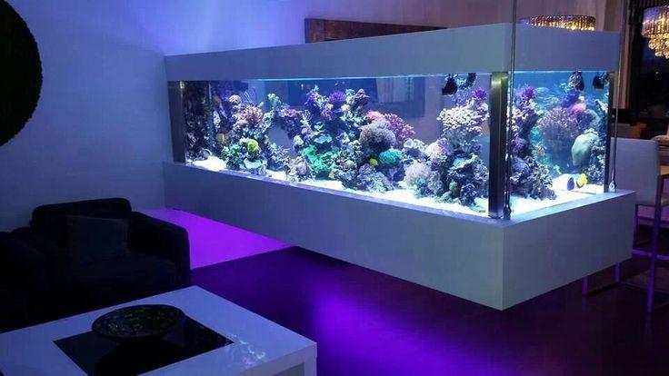 Floating 700 gallon reef tank in amsterdam custom reef for Luxury fish tanks