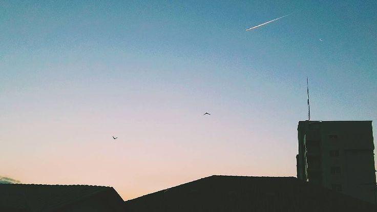 """#Repost @ta_tai_  """"A paz de estar em par com Deus""""  #vsco #vscocam #vscogram #naturelovers #sunset #skylover #moon #flyingbird #birds #sunlight #fimdetarde #passarinho #lua #paz #peaceful #ceucolorido #sky #blue"""
