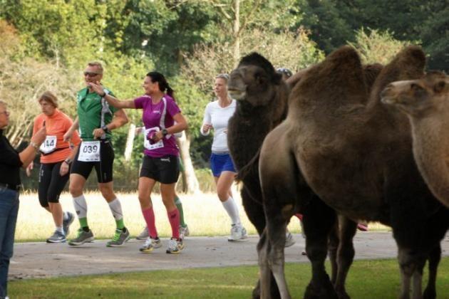 Maraton i Knuthenborg stor succes