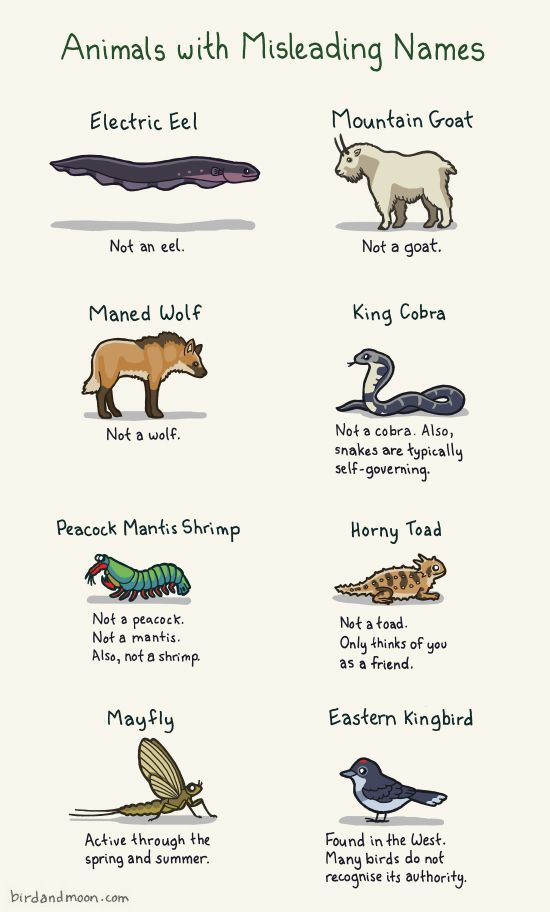 Animals with Misleading Names by birdandmoon #Animals #Misnomer