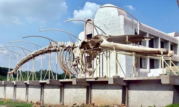 Пакистанский музей естествознания – #Пакистан #Исламобад (#PK_IS) Популярный музей Пакистана.  ↳ http://ru.esosedi.org/PK/IS/1000234770/pakistanskiy_muzey_estestvoznaniya/