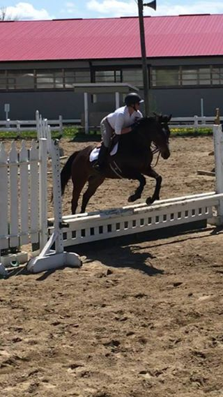 Lovely 5 year old Thoroughbred Mare Bay Street (Lara) is a 5 year old Thoroughbred Mare standing 16 hands. Lara has show miles in the hu