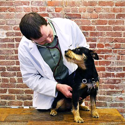 I'm an Emergency Vet, But I've Never Had My Own Veterinary Emergency Until Now