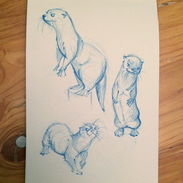 sketches of of otters in prismacolor pencil for practice   Samantha C George