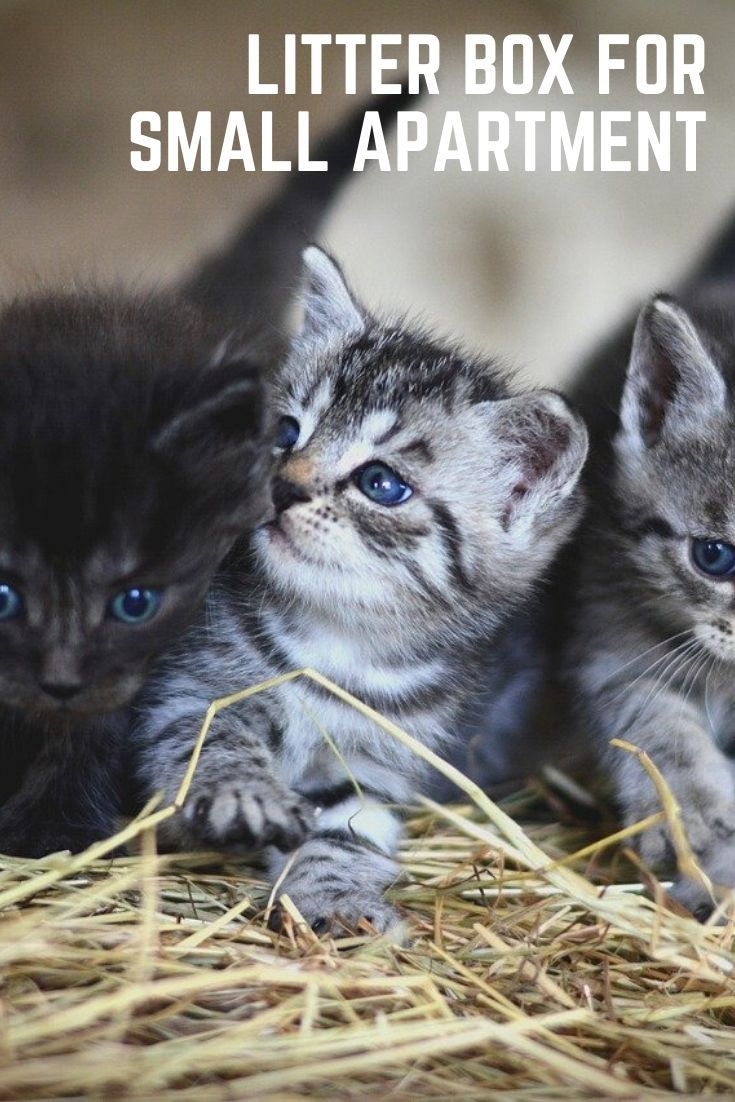 4 Tips To Stop Litter From Being Tracked Everywhere Cats And Meows Cat Training Litter Box Cats Cat Advice