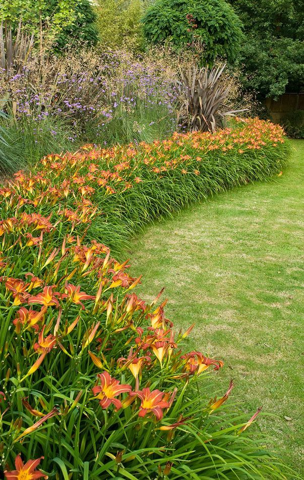 Massed planting of daylillies – swathes of single plant for impact.