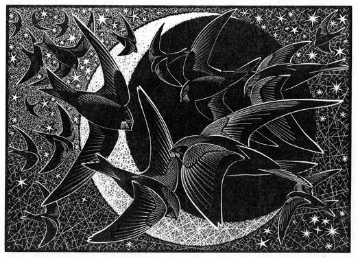 Colin See-Paynton ~ Nocturnal Encounters - Swifts, Stars and Sickle Moon ~ Wood Engraving, 12.5 x 18 cm