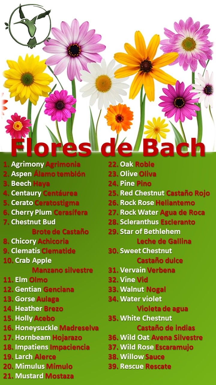#floresdebach #agrimony #soledad #ansiedad #adelgazar #beneficios #clematis #español #fibromialgia #gorse #gentian #holly #impatiens #larch #mostaza #mimulus #mustard #miedo #niños #oak #olive #paraniños #pine #remedies #rescate #rockrose #rockwater #salud #terapia #vervain #whitechestnut #willow #walnut #wildoat #terapias #alternativas #remedios