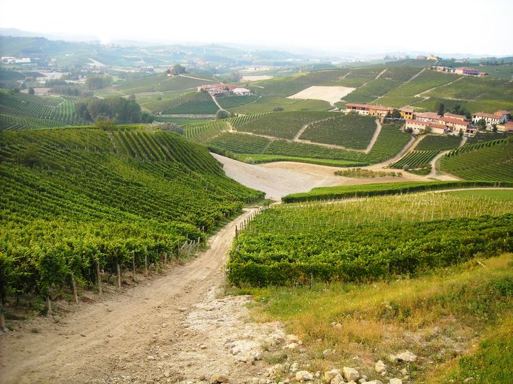 Vineyards and distant town, from the trails taken during the Trail del Moscato races   Sentieri e strade del Trail del Moscato #Piemonte #Piedmont #Italy