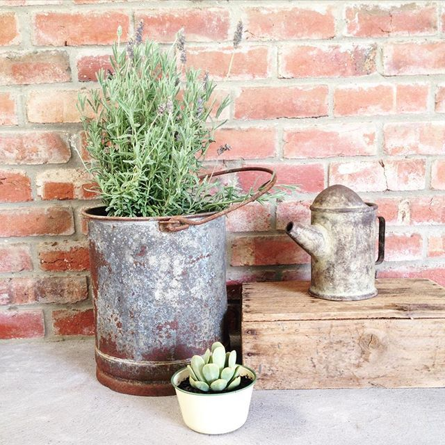 I finally got some plants for all the gorgeous  planters I've been collecting! This one is an old milking bucket that I found in the shed!
