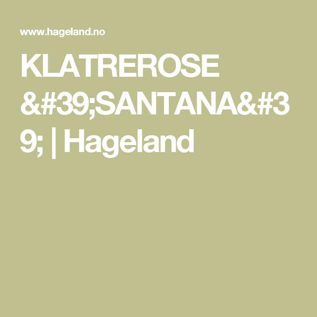 KLATREROSE 'SANTANA' | Hageland