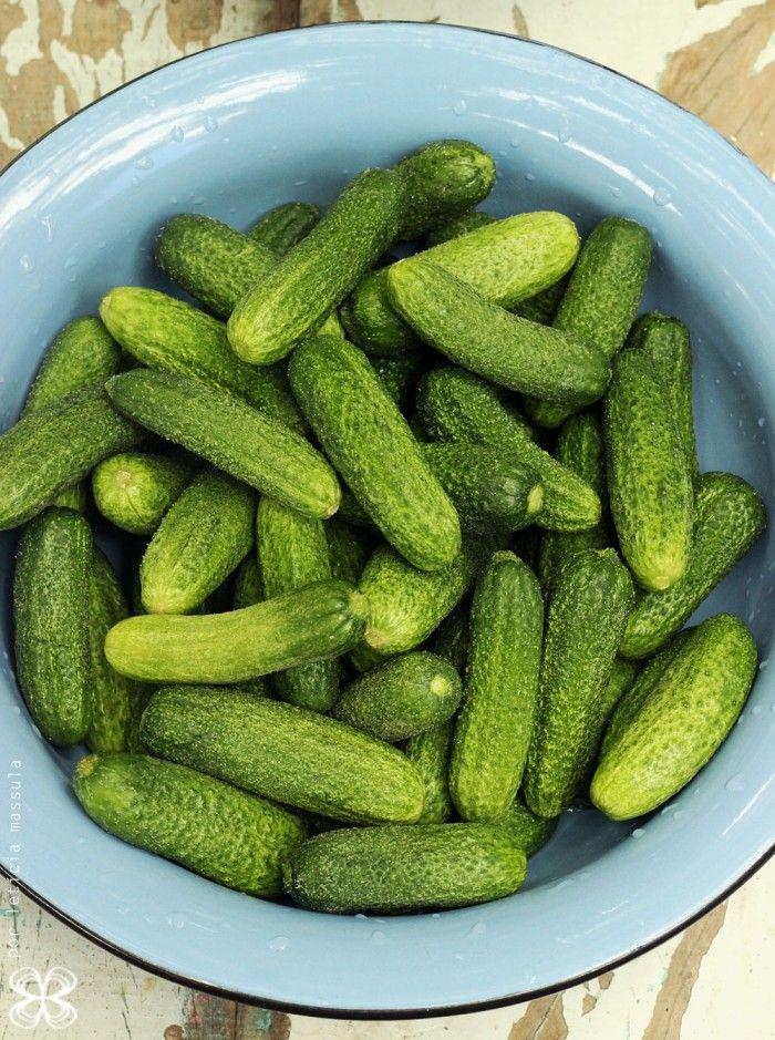 pepinos para pickles