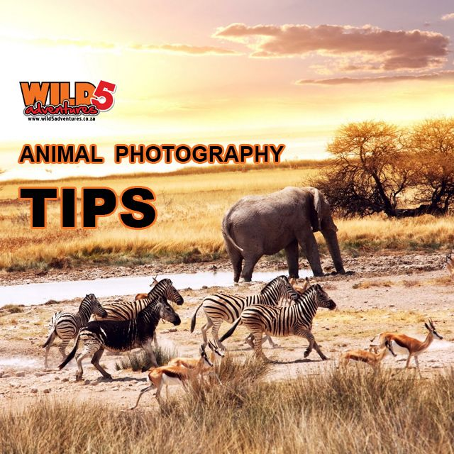 10 #tips to #Perfect #animal #photography: Shoot wider and closer #Wildlife #Durban http://bit.ly/1U6knWw